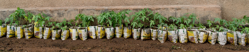 A row of seedlings against a wall.