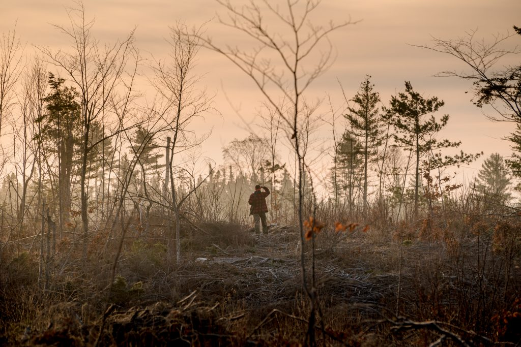 Photo of a man standing in a forest